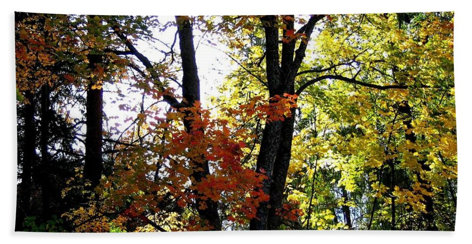 Autumn Beach Towel featuring the photograph Maple Mania 16 by Will Borden