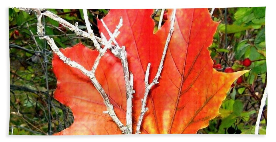 Autumn Beach Towel featuring the photograph Maple Mania 6 by Will Borden