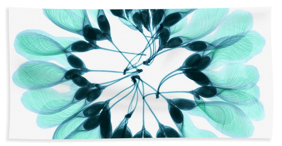 Nature Beach Towel featuring the photograph Maple Seeds X-ray by Ted Kinsman