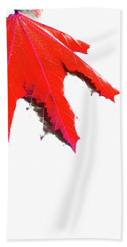 Canada Beach Towel featuring the photograph Maple by Traci Cottingham
