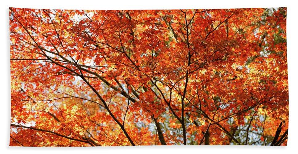 Maple Beach Towel featuring the photograph Maple Tree Foliage by Gaspar Avila