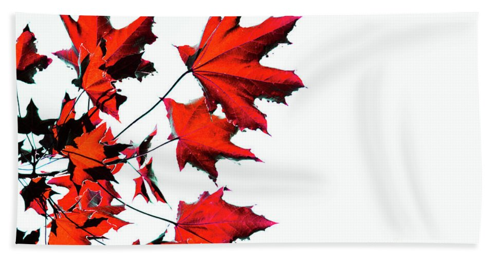 Canada Beach Towel featuring the photograph Maple Tree by Traci Cottingham