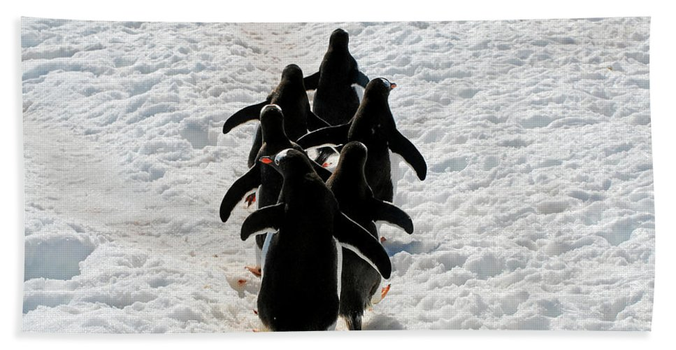 Antarctica Beach Towel featuring the photograph March Of Penguins by Gabriel Jardim