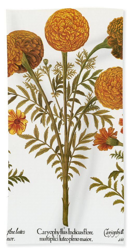 1613 Beach Towel featuring the photograph Marigolds, 1613 by Granger