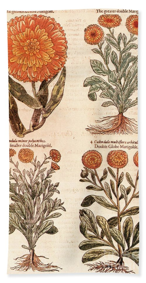 1597 Beach Towel featuring the photograph Marigolds by Granger
