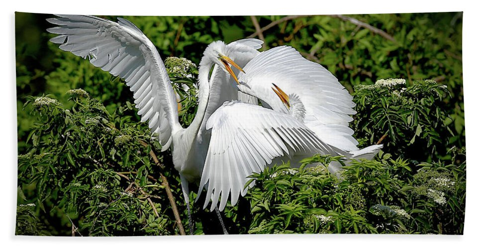 Great Egrets Beach Towel featuring the photograph Marital Bliss by Dennis Goodman