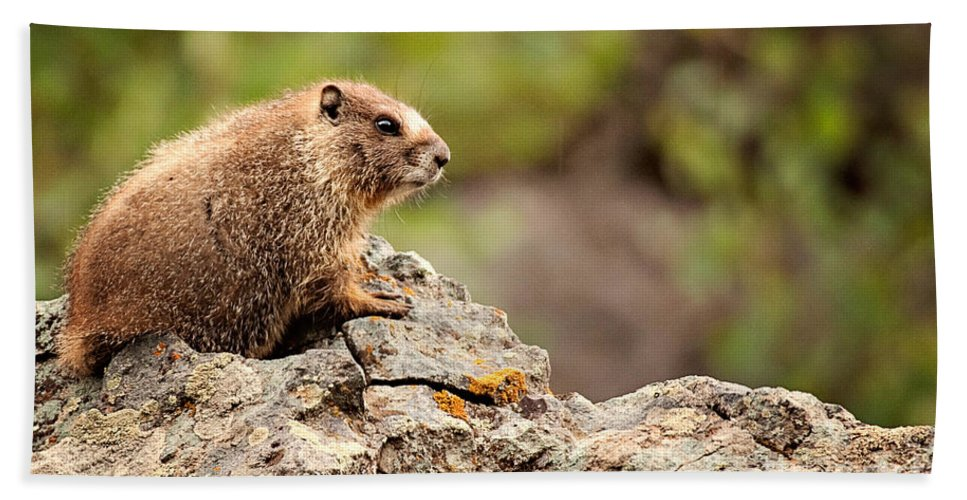 Colorado Beach Towel featuring the photograph Marmot by Lana Trussell
