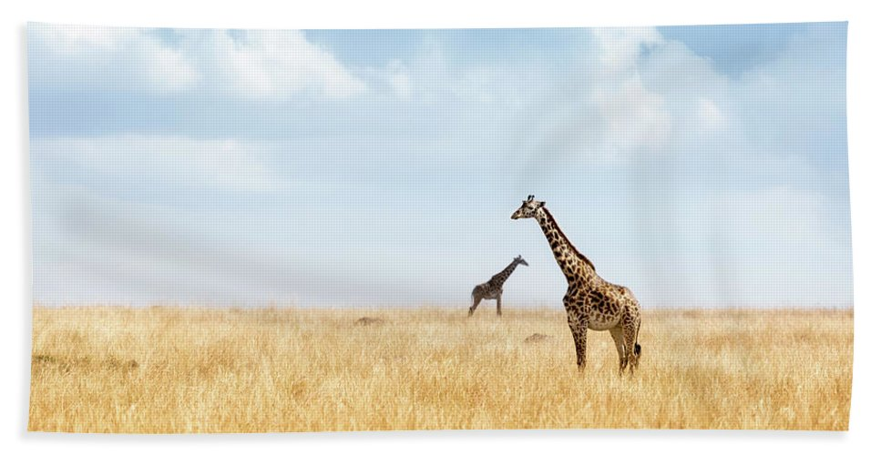 Giraffe Beach Towel featuring the photograph Masai Giraffe In Kenya Plains by Susan Schmitz