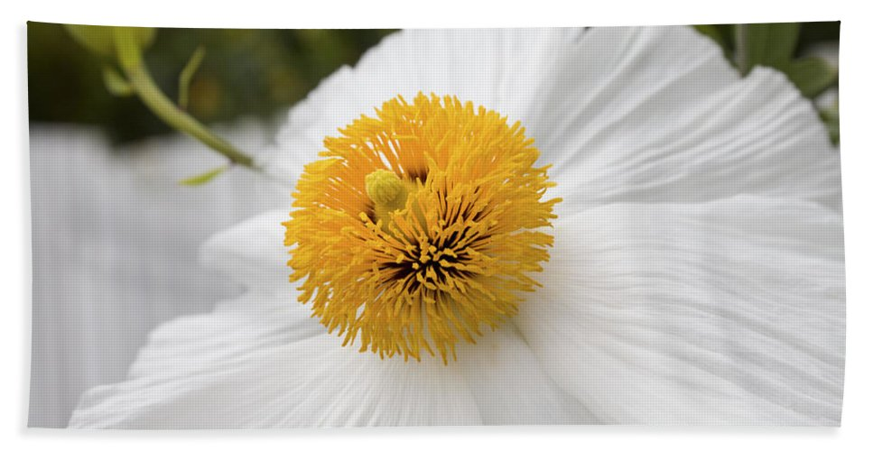 White Beach Towel featuring the photograph Matillija Poppy by Diane Macdonald
