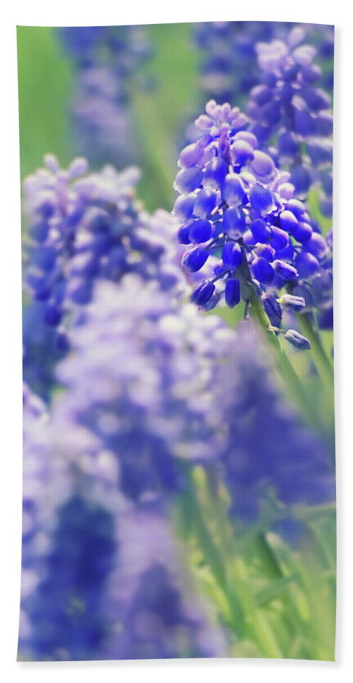 Flowers Beach Towel featuring the photograph Maytime by Iryna Goodall