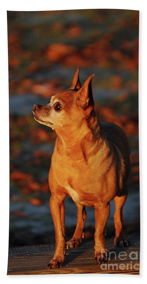 Pets Beach Towel featuring the photograph Mcgee by Skip Willits