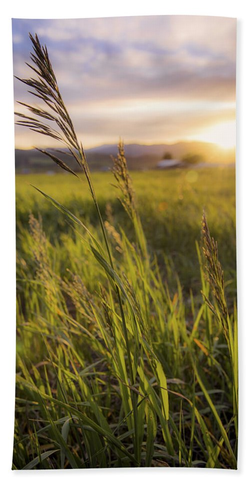 Meadow Light Beach Towel featuring the photograph Meadow Light by Chad Dutson