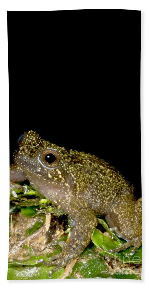 Mehu�n Green Frog Beach Towel featuring the photograph Mehu�n Green Frog by Dant� Fenolio