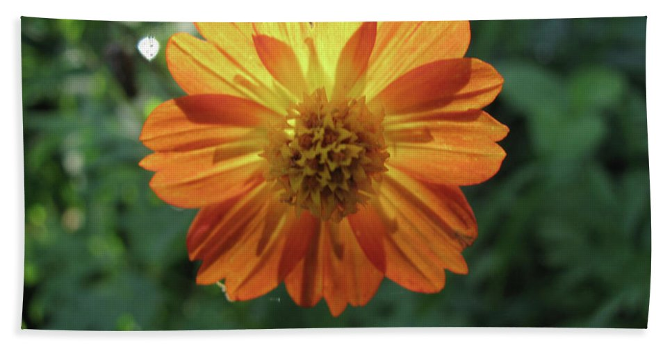 Flower Beach Towel featuring the photograph Mexican Hat by Donna Brown
