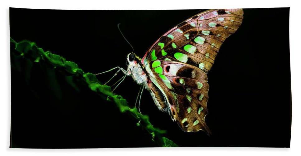 Plant Beach Towel featuring the photograph Midnight Butterfly by Joann Long