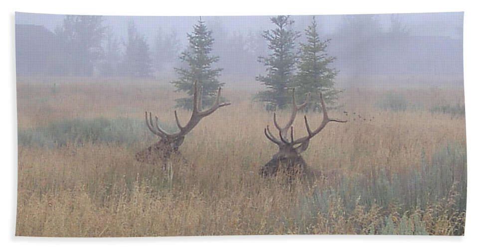 Wildlife Beach Towel featuring the photograph Misty Morning by Darren Rudd
