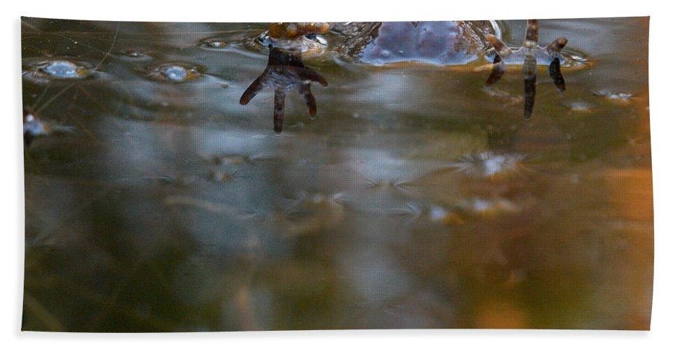 Lehtokukka Beach Towel featuring the photograph Mixed Frogs Hands Up by Jouko Lehto