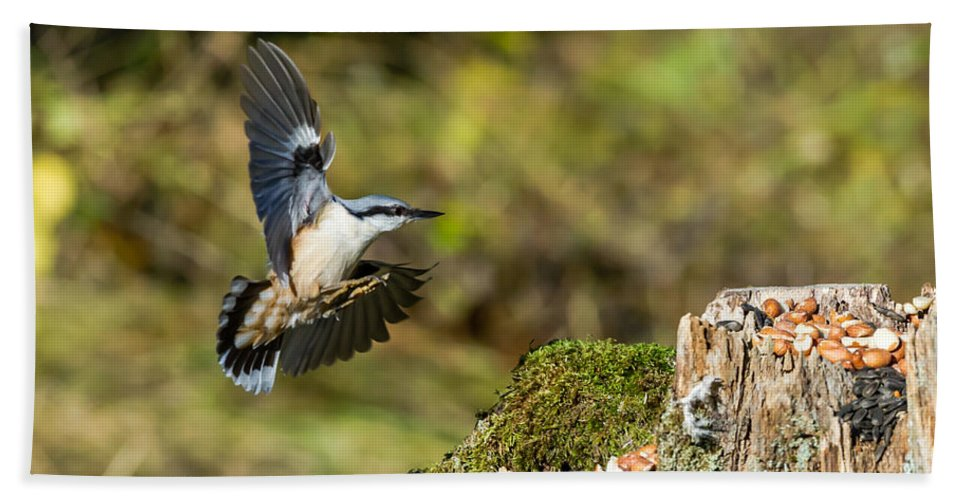 Nuthatch Beach Towel featuring the photograph Mmm Peanuts by Torbjorn Swenelius