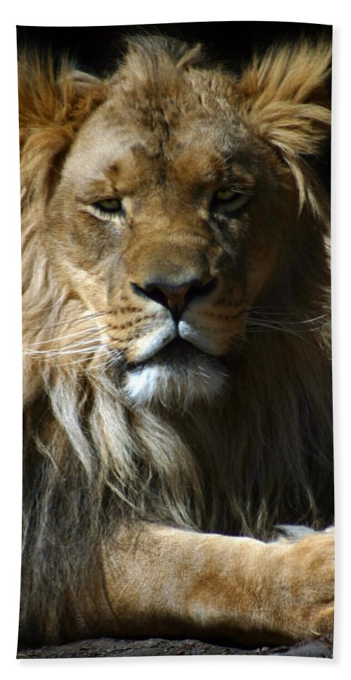 Lion Beach Towel featuring the photograph Mohawk by Anthony Jones