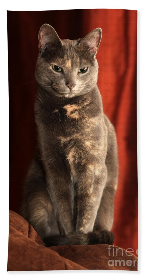 Cat Beach Sheet featuring the photograph Mollie by Amanda Barcon