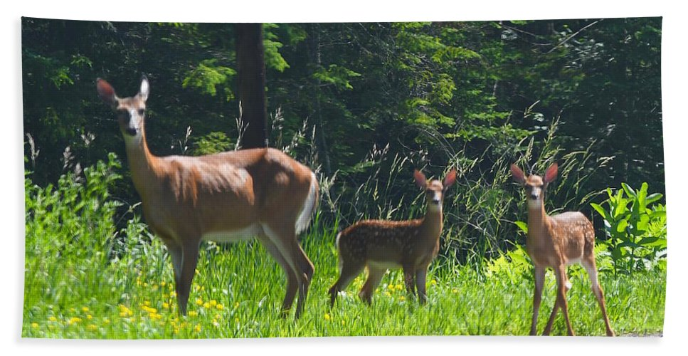 Deer Beach Towel featuring the photograph Mom And Fawns With Spots by Hella Buchheim