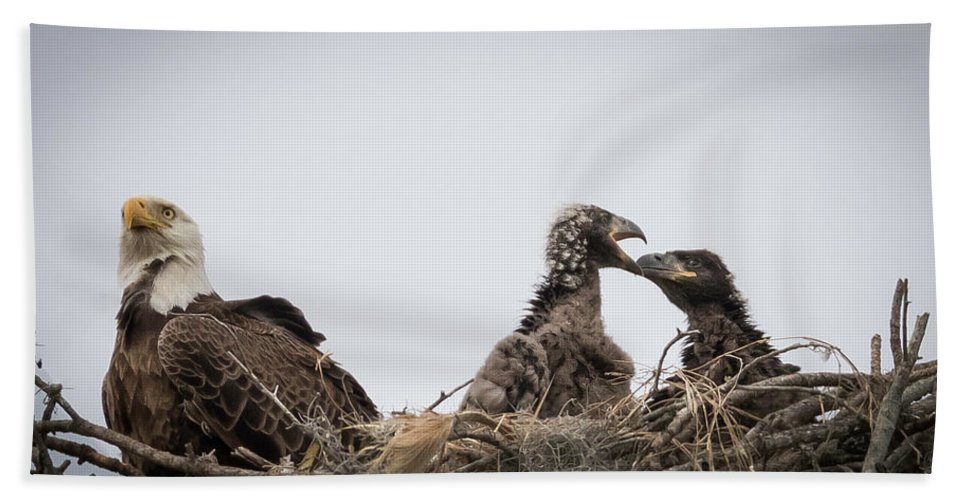 Birds Beach Towel featuring the photograph Mom And Little Eaglets by Tony Fruciano