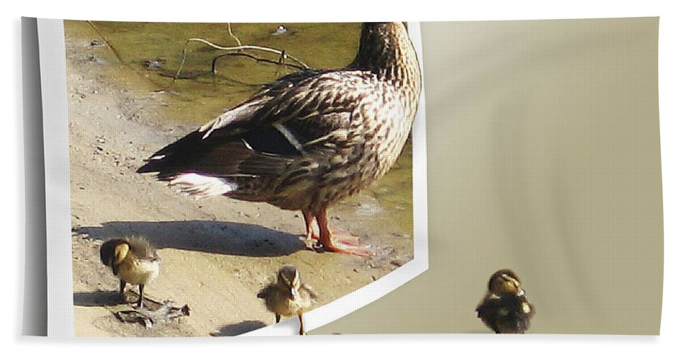 2d Beach Towel featuring the photograph Momma And Her Babies by Brian Wallace