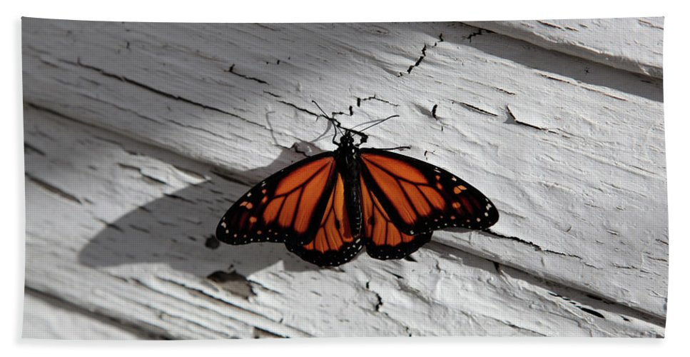 Monarch Butterfly Beach Towel featuring the photograph Monarch Butterfly by Dean Triolo