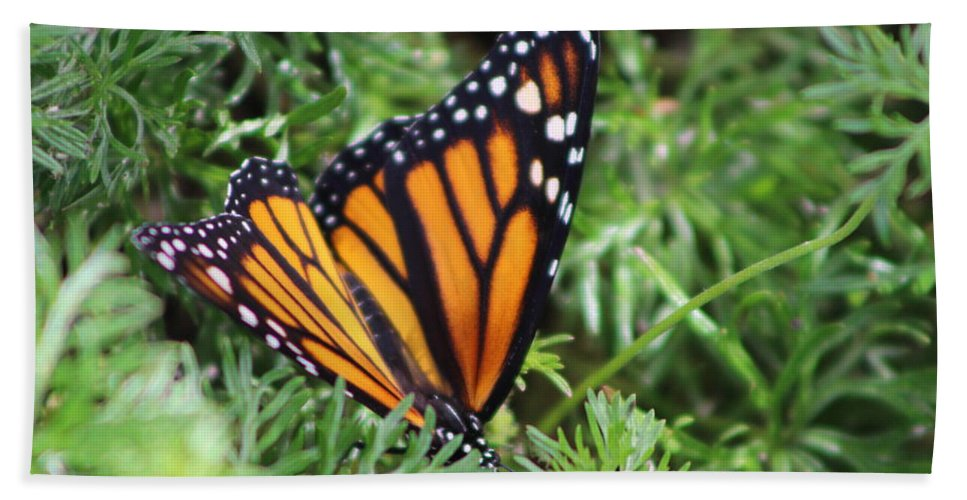 Monarch Butterfly Beach Towel featuring the photograph Monarch Butterfly In Lush Leaves by Colleen Cornelius