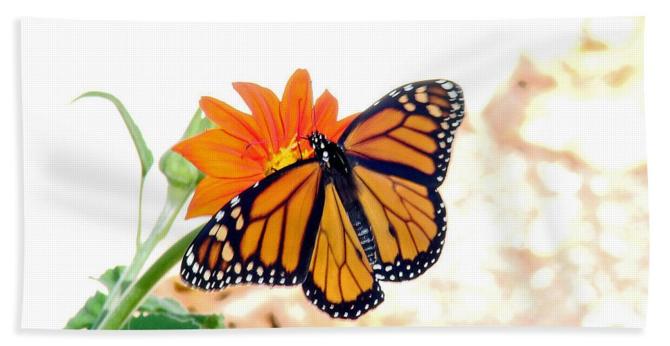 Butterflies Beach Towel featuring the photograph Monarch by Mary Halpin