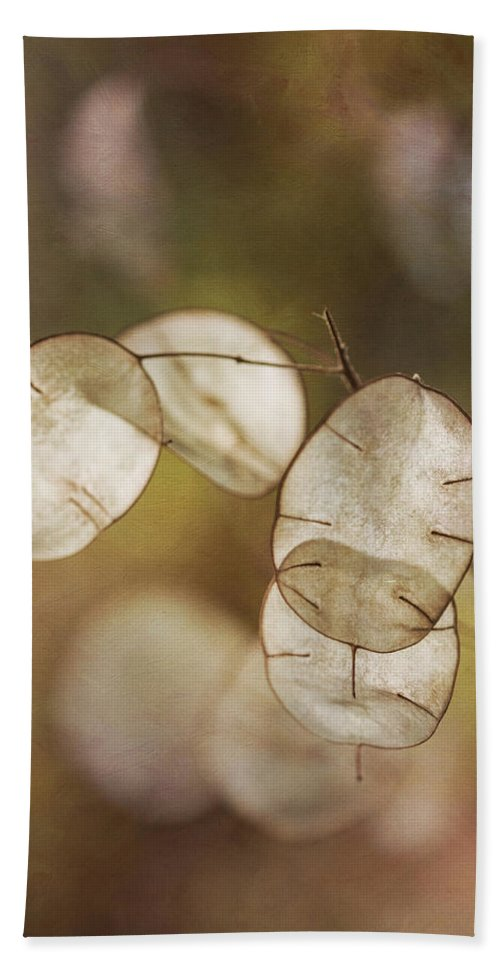 Money Plant Beach Towel featuring the photograph Money Plant by Dale Kincaid