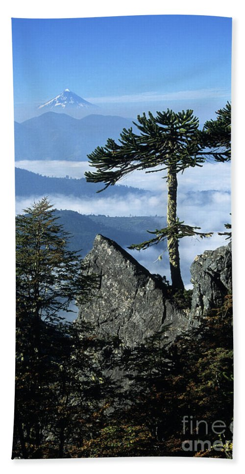 Chile Beach Sheet featuring the photograph Monkey Puzzle Trees In Huerquehue National Park by James Brunker