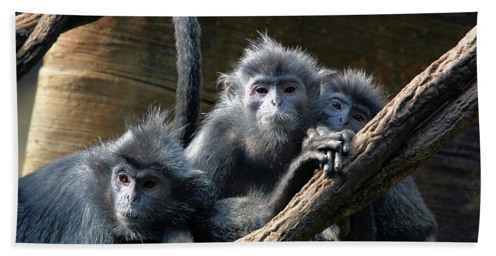 Monkey Beach Towel featuring the photograph Monkey Trio by Karol Livote