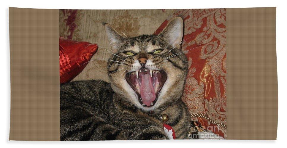 Cats Beach Towel featuring the photograph Monty's Yawn by Jolanta Anna Karolska