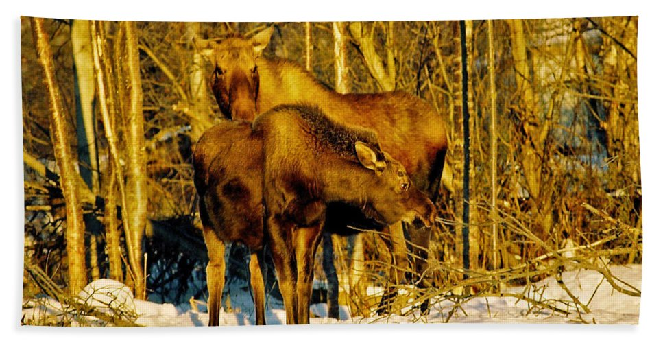 Morning Beach Towel featuring the photograph Moose In The Morning by Juergen Weiss