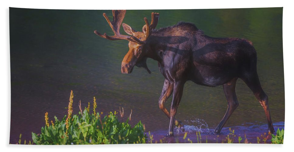 Luis Ramirez Beach Towel featuring the photograph Moose On The Loose by Luis A Ramirez
