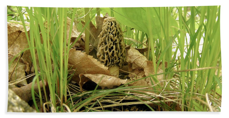 Morel Beach Towel featuring the photograph Morel Mushroom by Angie Rea