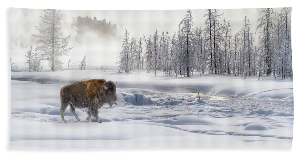 Yellowstone Beach Towel featuring the photograph Morning Bison 4 7912-4 by Karen Celella