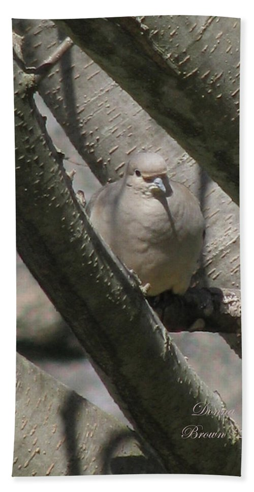 Bird Beach Towel featuring the photograph Morning Dove by Donna Brown