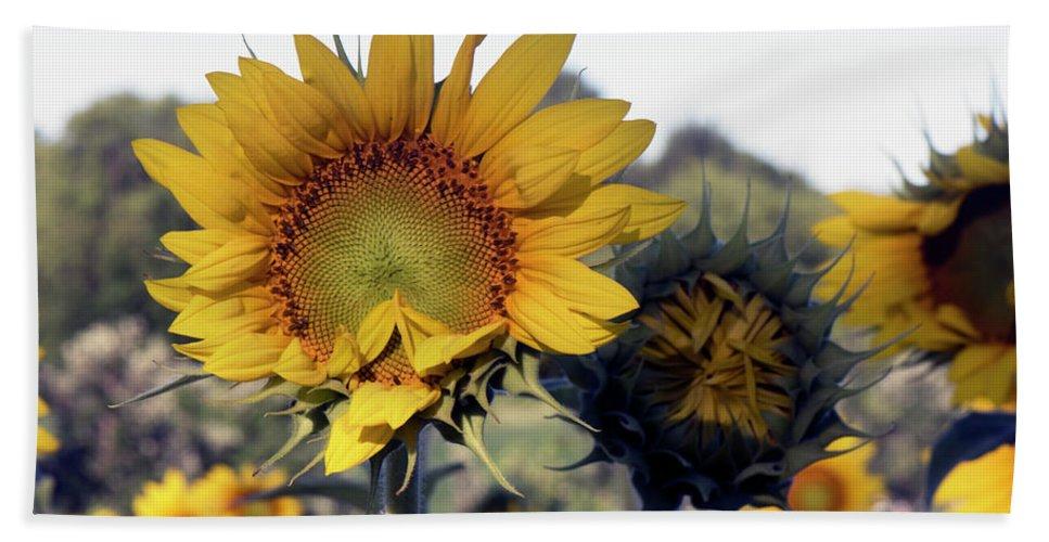 Sunflower Beach Towel featuring the photograph Morning Prayer by Jayne Gohr