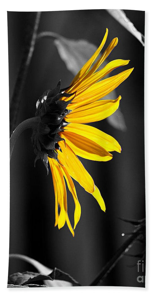 Clay Beach Towel featuring the photograph Morning Sun by Clayton Bruster