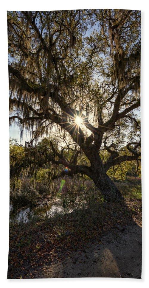 Oak Tree Beach Towel featuring the photograph Morning Sun Through The Oak by Rick Berk