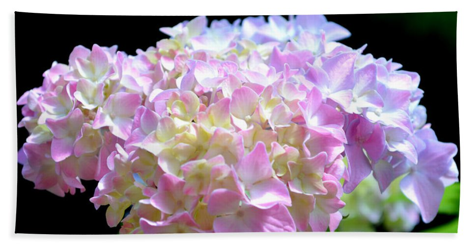 Flower Beach Towel featuring the photograph Morning Whisper - Hydrangea by H Cooper