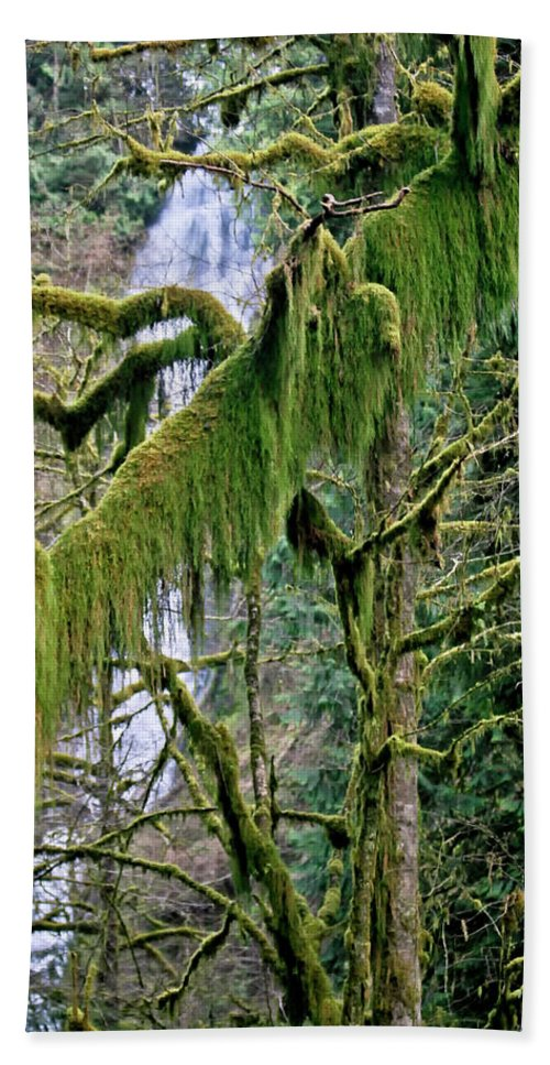 Moss Beach Towel featuring the photograph Moss At Munson Creek by Albert Seger