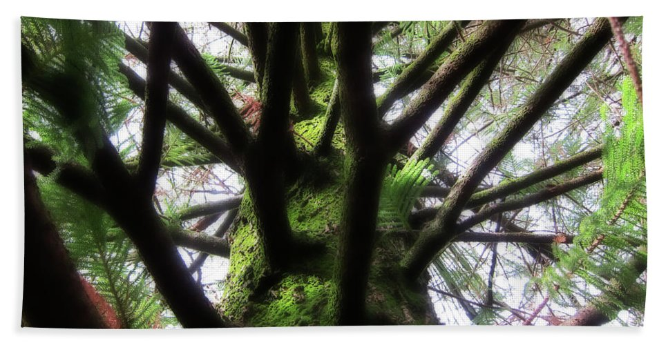 Pine Beach Towel featuring the photograph Moss Tree by Douglas Barnard