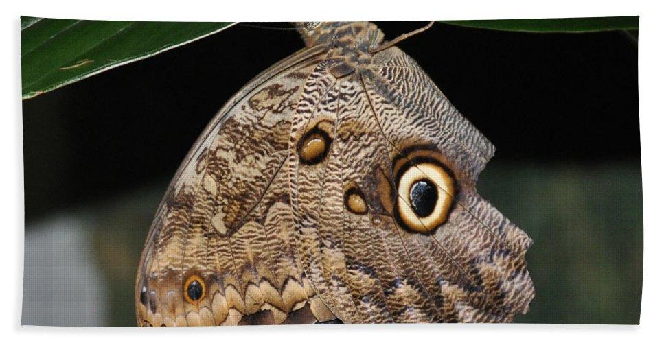 Moth Beach Towel featuring the photograph Moth 2 by Rich Bodane