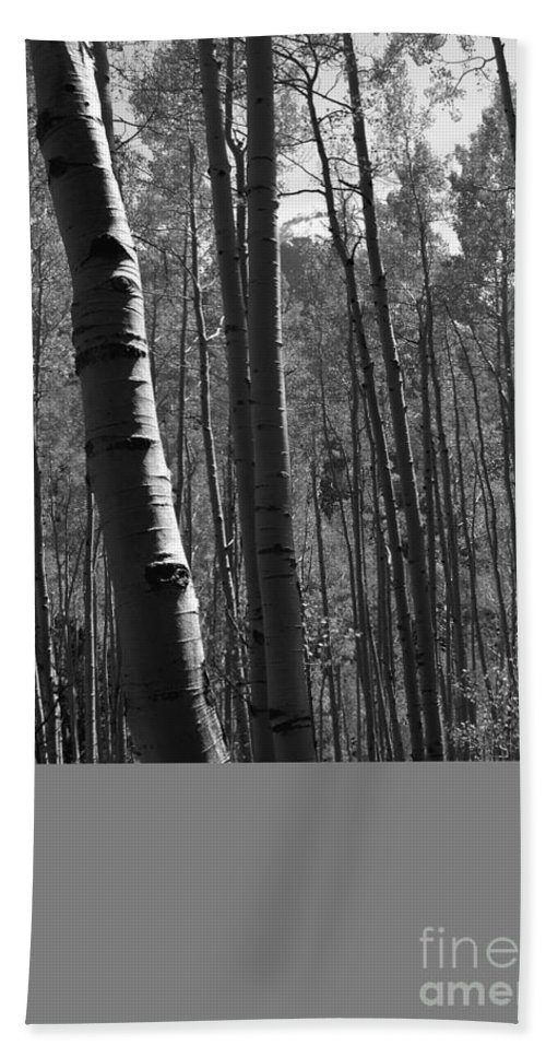 Mountains Beach Towel featuring the photograph Mountain Aspens by David Lee Thompson