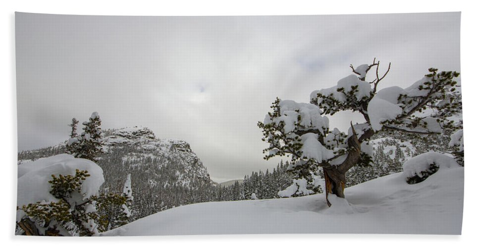 Landscape Beach Towel featuring the photograph Mountain Lonely Tree by Rob Lantz