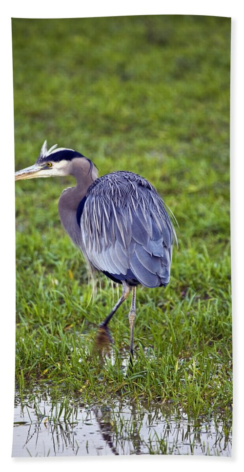 Heron Beach Towel featuring the photograph Moving by Karen Ulvestad