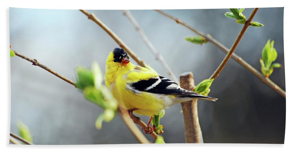Finch Beach Towel featuring the photograph Mr. Sunshine by Lori Tambakis